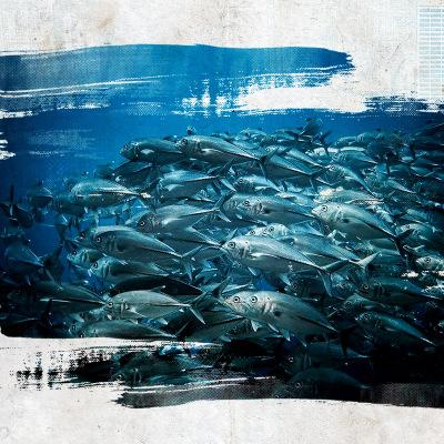 薄荷岛巴里卡萨大断层帕梅拉坎有证潜水fundive中文潜店不含接送