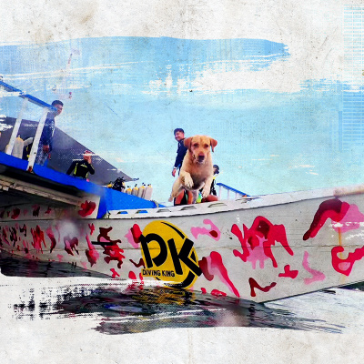 海鸟窝旅游 菲律宾薄荷岛王者潜水ow潜水考证 aow课程中文教练